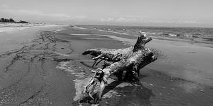 SCANO BOA - l'isola che non c'è