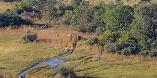 Delta dell'okawango