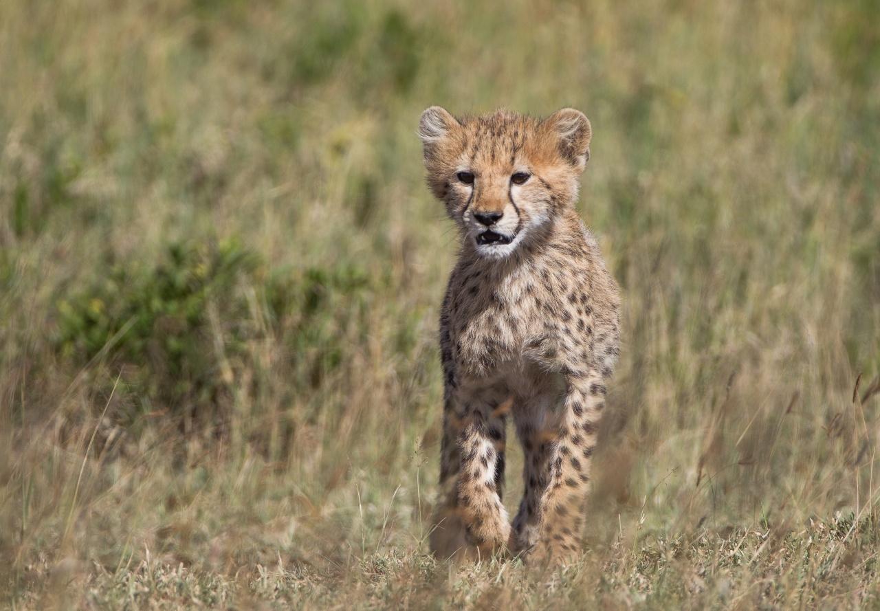 Serengeti - Tanzania 2013