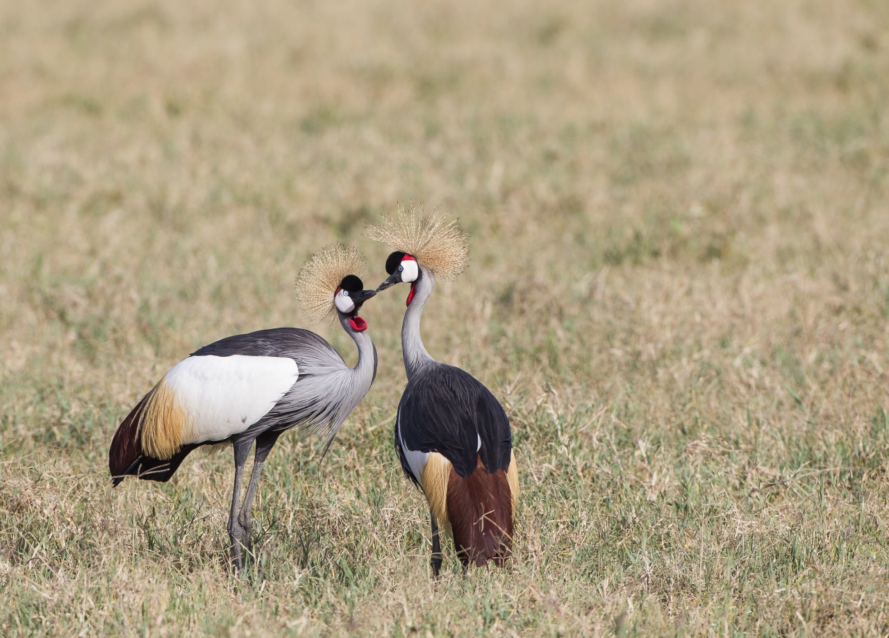 Ngorongoro Crater - Tanzania 2013