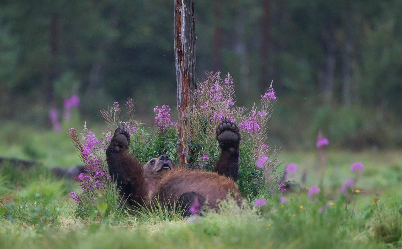 Boreal - Finlandia 2013