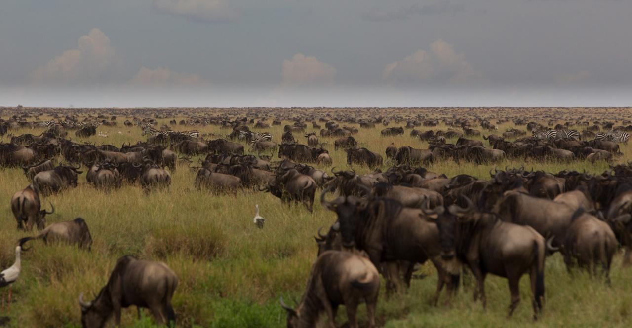 Tanzania 2012 - Serengeti