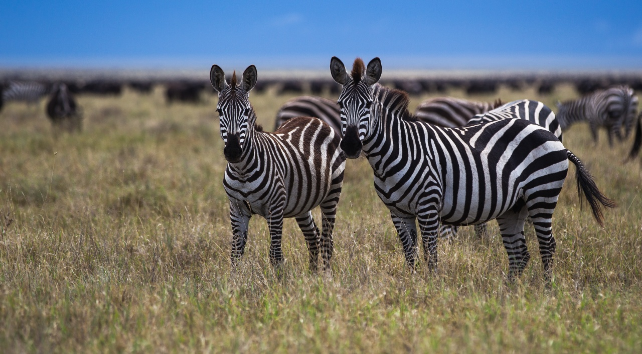 Serengeti - Tanzania 2012